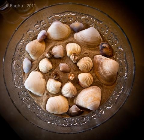 Sea Shells..Sea Shells
